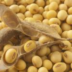 Waspada, Ternyata kacang Kedelai Mengandung 5 Racun Ini