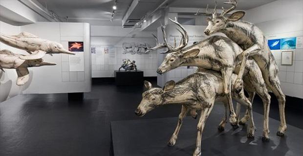 Museum of Sex New York, Amerika Serikat