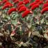 Indonesia Tidak Butuh Bantuan AS Untuk Memburu Teroris Santoso