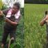Jenderal Bintang Tiga Susno Duadji Kini Menjadi Seorang Petani di Kampung