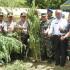 TNI Menemukan Ladang Ganja Seluas 60 Ha di Mandailing Natal Sumut