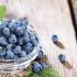Blueberry Bisa Membuat Tubuhmu Lebih Sehat