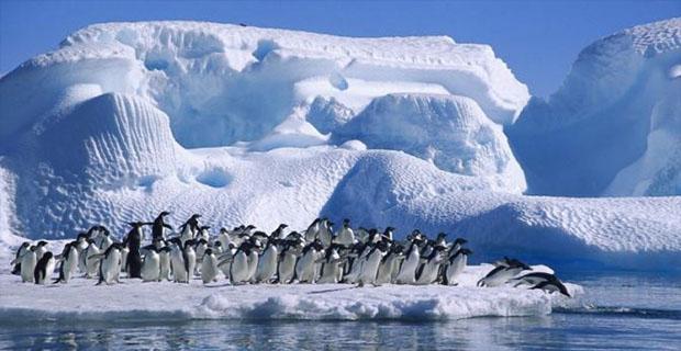 Jelajah ke Antartika? Berikut Pengalaman yang Anda Alami