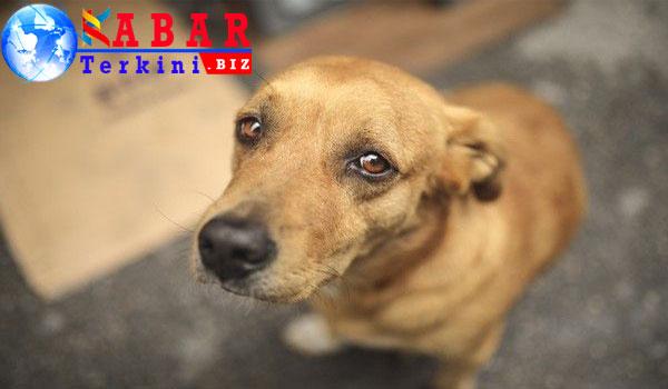 Geger Anjing Disebut Jelmaan Anak SMP di NTB, Ternyata Faktanya Memilukan